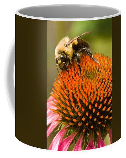 Coneflower Coffee Mug featuring the photograph Bee On Coneflower by Jason Young