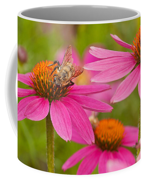 Coneflowers Coffee Mug featuring the photograph Bee On Coneflower by Lindley Johnson