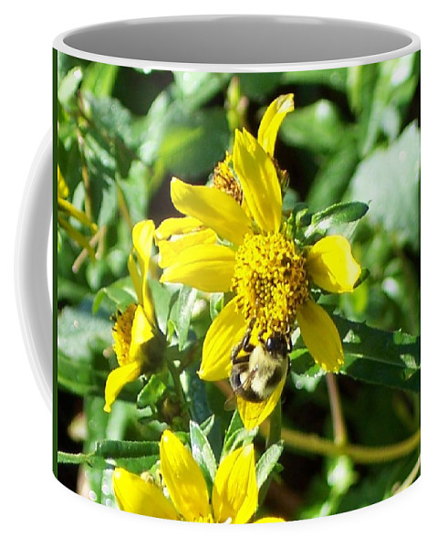 Bee Coffee Mug featuring the photograph Bee On Flower by Michelle Miron-Rebbe