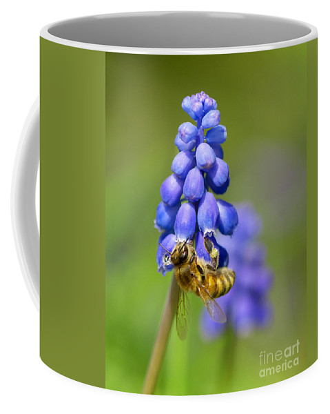 Bee Coffee Mug featuring the photograph Bee On Grape Hyacinth by Sharon Talson