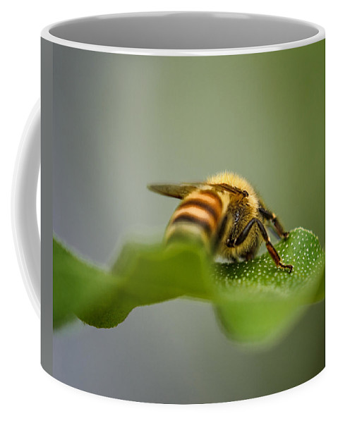 Bee Coffee Mug featuring the photograph Bee Still by Susan Capuano