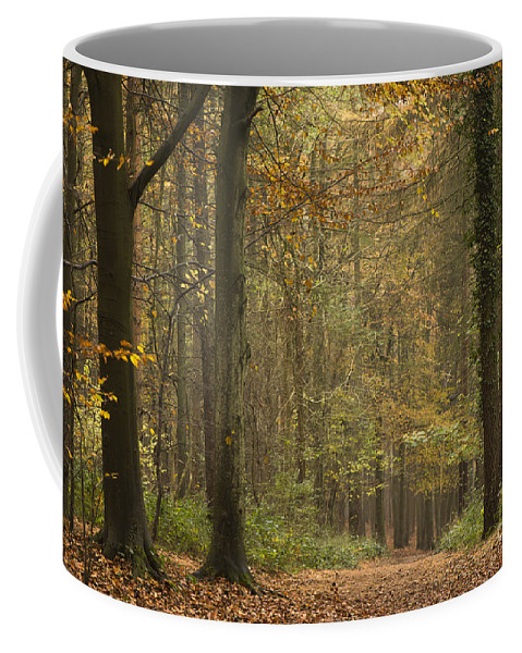 Atmospheric Coffee Mug featuring the photograph Beech Wood Walk by Anne Gilbert