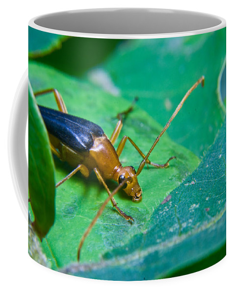 Beetle Coffee Mug featuring the photograph Beetle Sneeking Around by Douglas Barnett