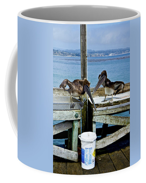 Sea Birds Coffee Mug featuring the photograph Beggars by Tom Kelly