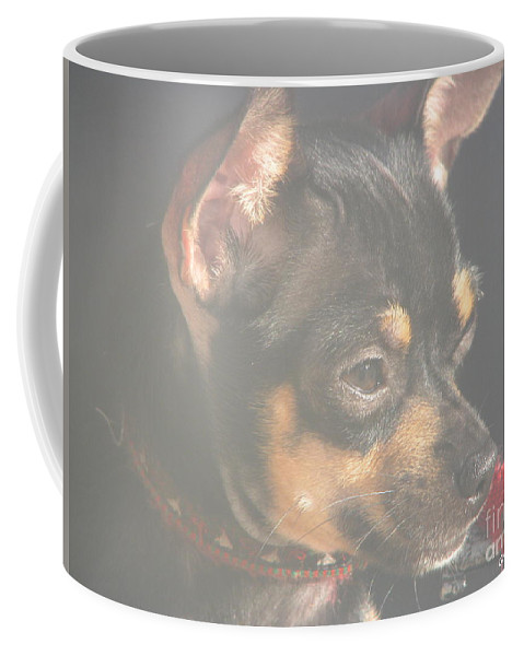 Art For The Wall...patzer Photography.chihuahua Coffee Mug featuring the photograph Bella by Greg Patzer