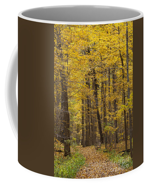 Fall Coffee Mug featuring the photograph Bench In Fall Color by Emma England