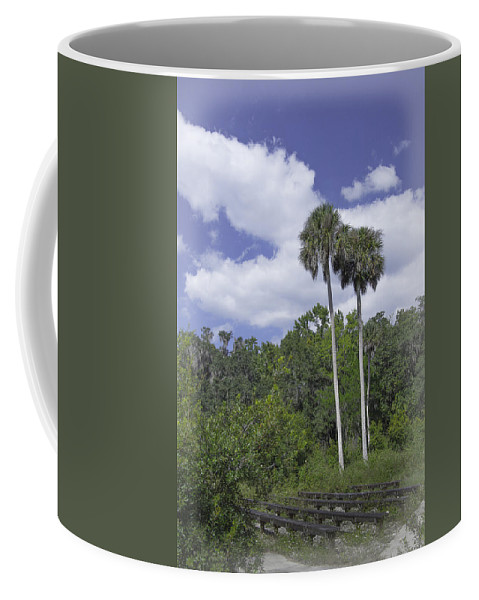 Trees Coffee Mug featuring the photograph Benched At Rainbow Springs Campground by Judy Hall-Folde