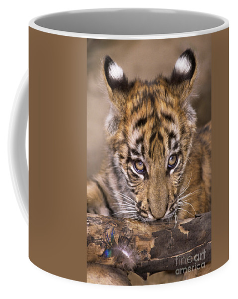 Bengal Tiger Coffee Mug featuring the photograph Bengal Tiger Cub And Peacock Feather Endangered Species Wildlife Rescue by Dave Welling