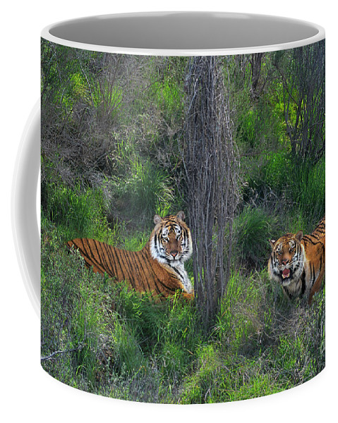 Bengal Tigers Coffee Mug featuring the photograph Bengal Tigers On Grassy Hillside Endangered Species Wildlife Rescue by Dave Welling