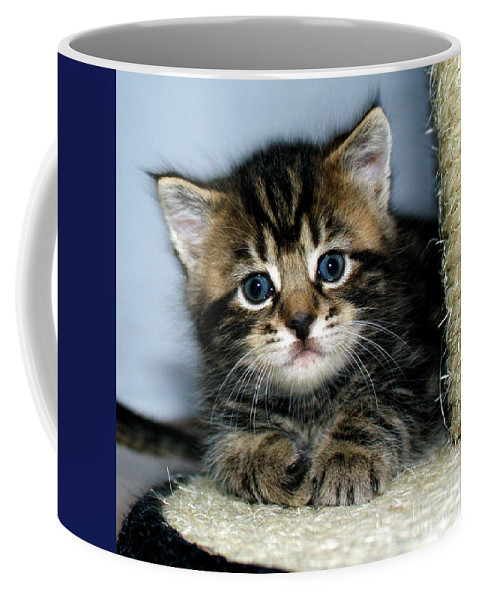 Kitten Coffee Mug featuring the photograph Benny The Kitten Resting by Terri Waters
