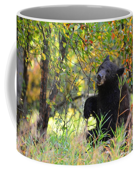 Black Bear Coffee Mug featuring the photograph Berry Picking by Deanna Cagle