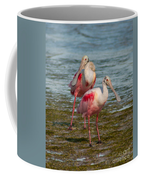 Roseate Spoonbills Coffee Mug featuring the photograph Best Friends by Stephen Whalen