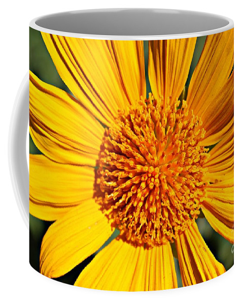Sun Coffee Mug featuring the photograph Big Bright Bold by Clare Bevan