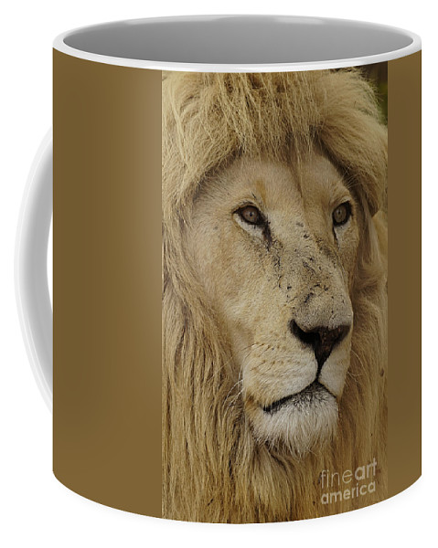 Big Cats Coffee Mug featuring the photograph Big Cats 15 by Ben Yassa