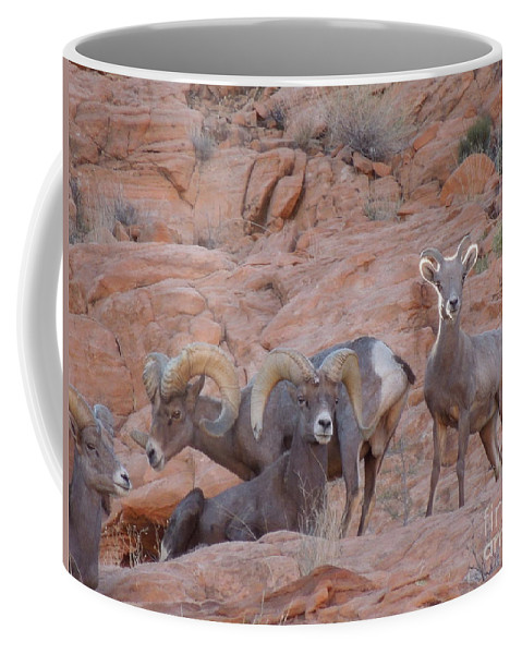 Big Horn Sheep Coffee Mug featuring the photograph Big Horn Group Pose by Donna Jackson