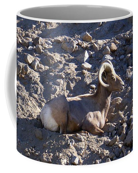 Barbara Snyder Coffee Mug featuring the digital art Big Horn Sheep Close Up by Barbara Snyder
