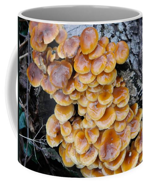 Mushrooms Coffee Mug featuring the photograph Big Mushrooms Family by Loreta Mickiene