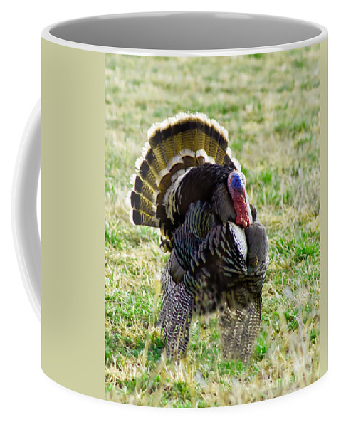 Birds Coffee Mug featuring the photograph Big Tom by Robert Bales