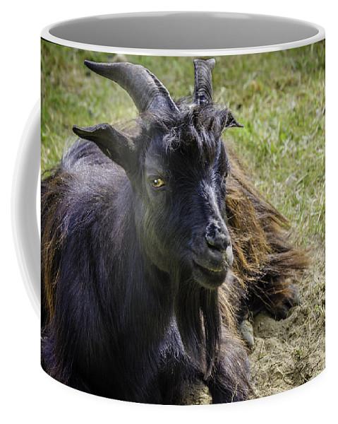 Goat Coffee Mug featuring the photograph Billy The Kid by LeeAnn McLaneGoetz McLaneGoetzStudioLLCcom