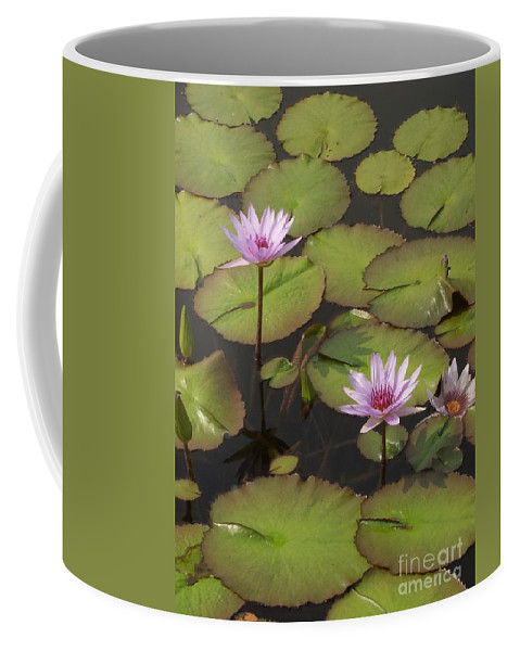 Water Coffee Mug featuring the photograph Biltmore Water Lillies by Brook Steed