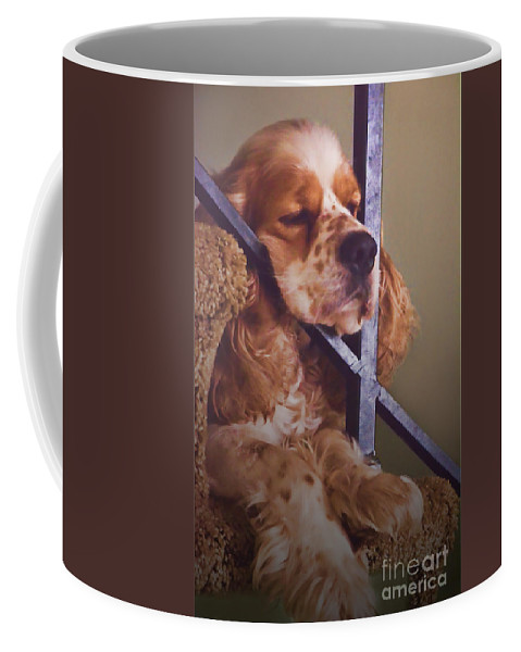 Nature Coffee Mug featuring the photograph Bingo Loves His Nap On The Stairs by Debbie Portwood