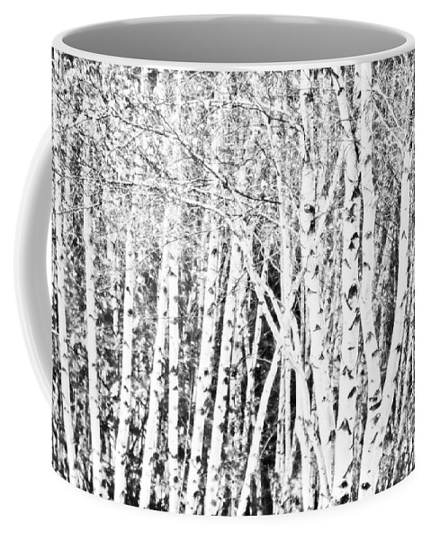 Birch Trees Coffee Mug featuring the photograph Birch Forest by Alana Ranney