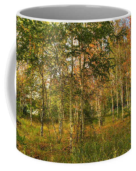 Art Coffee Mug featuring the photograph Birch Trees2 by Svetlana Sewell