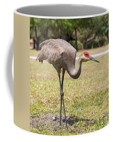 Sandhill Crane Coffee Mug featuring the photograph Bird At Work by John M Bailey