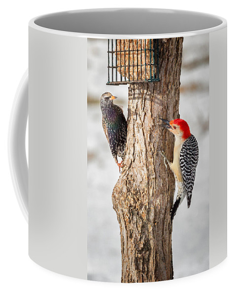 Red Bellied Woodpecker Coffee Mug featuring the photograph Bird Feeder Stand Off by Bill Wakeley