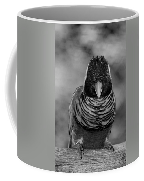 Macaws Coffee Mug featuring the photograph Bird In Your Face Bw by Rob Hans