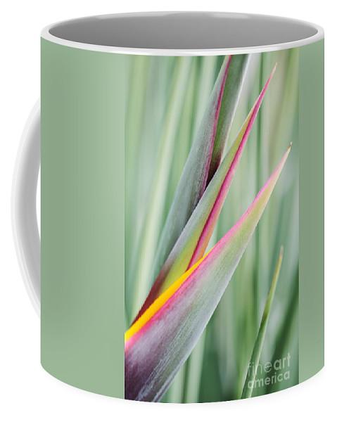 Strelitzia Juncea Coffee Mug featuring the photograph Bird Of Paradise Flower Bud by Neil Overy