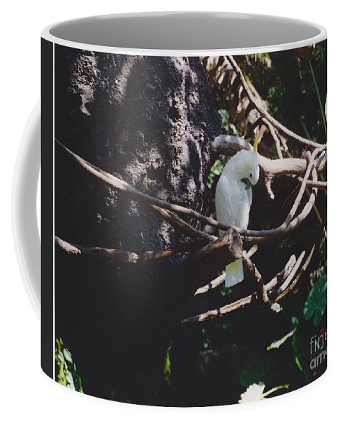 Nature Coffee Mug featuring the photograph Birdie Sitting In The Tree by Michelle Powell