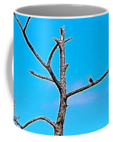 Nature Coffee Mug featuring the photograph Birds Eye View by Stephanie Bland