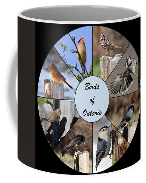 Birds Coffee Mug featuring the photograph Birds Of Ontario by Davandra Cribbie
