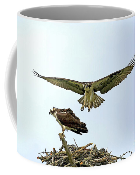 Birds Coffee Mug featuring the photograph Birds Of Prey by Deborah Benoit