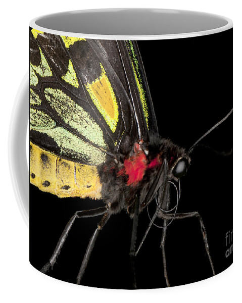 Closeup Coffee Mug featuring the photograph Birdwing Butterfly by Anthony Totah