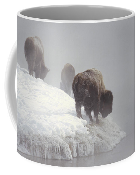 Feb0514 Coffee Mug featuring the photograph Bison Along Snowy Riverbank Yellowstone by Konrad Wothe