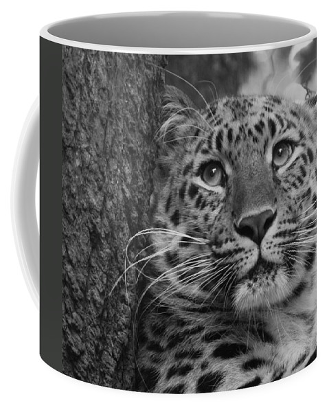 Animal Coffee Mug featuring the photograph Black And White Amur Leopard by Chris Boulton