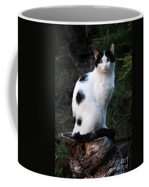 Cat Coffee Mug featuring the photograph Black And White Cat On Tree Stump by Carol Groenen