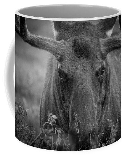 Moose Coffee Mug featuring the photograph Black And White Moose Close Up by Tony Hake
