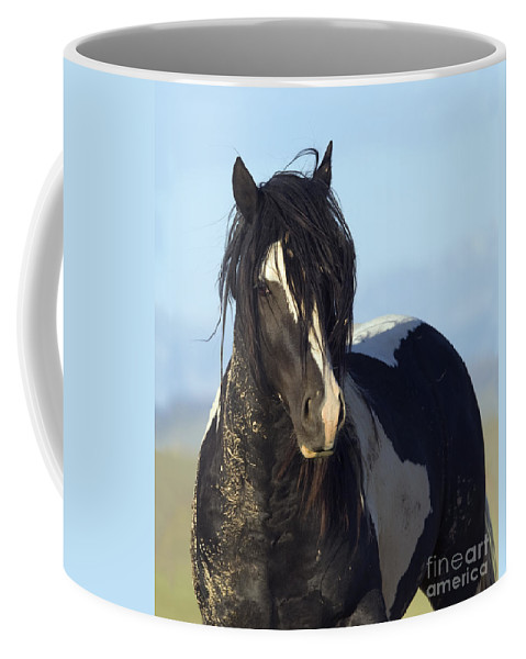 Horse Coffee Mug featuring the photograph Black And White Stallion Comes Close by Carol Walker