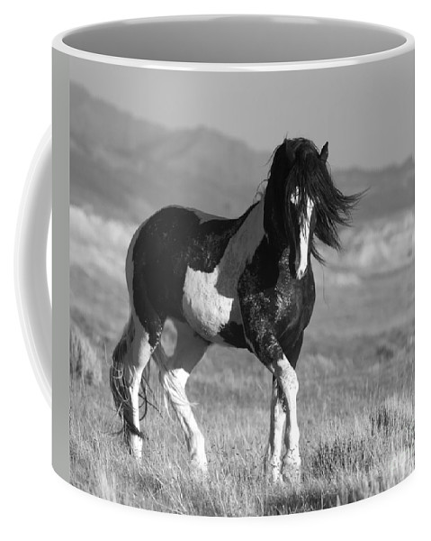 Horse Coffee Mug featuring the photograph Black and White Stallion Walks by Carol Walker