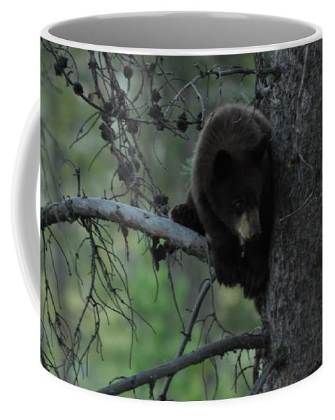 Black Bear Coffee Mug featuring the photograph Black Bear Cub in Tree by Frank Madia