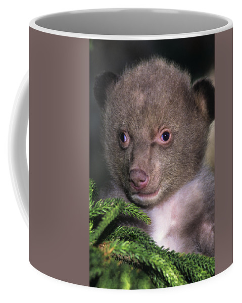 Black Bear Coffee Mug featuring the photograph Black Bear Cub Portrait Wildlife Rescue by Dave Welling