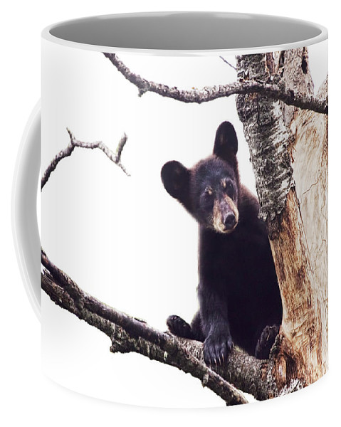 Art Coffee Mug featuring the photograph Black Bear Cub Up In A Dead Tree In Northern Minnesota by Randall Nyhof