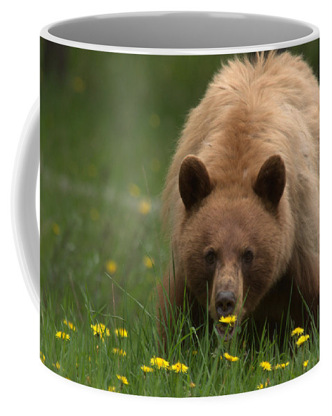 Bear Coffee Mug featuring the photograph Black Bear by Frank Madia