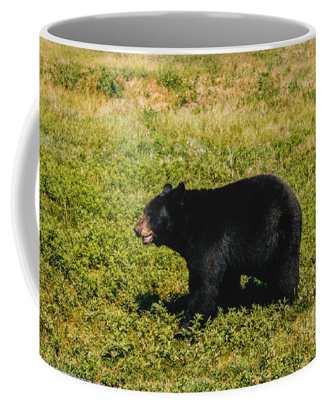 Black Bear Coffee Mug featuring the photograph Black Bear by Tommy Anderson