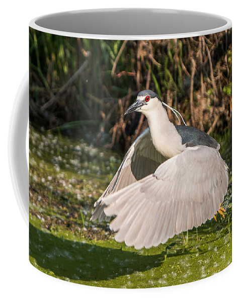 Black-crowned Coffee Mug featuring the photograph Black-crowned Night Heron by Patti Deters