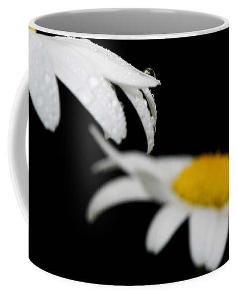 Flower Coffee Mug featuring the photograph Black Daisy Reflection by Lisa Knechtel