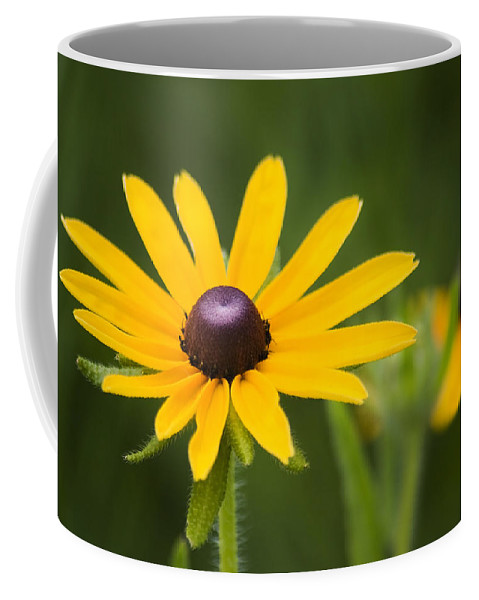 3scape Photos Coffee Mug featuring the photograph Black Eyed Susan by Adam Romanowicz